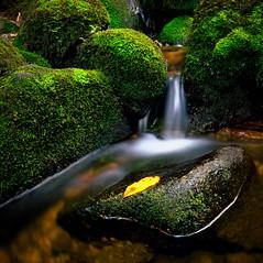 Wasser im Fluss (Jensens PhotoGraphy) Tags: deutschland germany natur nature landschaft landscape langzeitbelichtung wasser water wasserfall wald steine stone moos schwarzwald triberg
