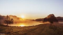 09092018-DSC_0116 (vidjanma) Tags: matin soleil étang brume ardenne