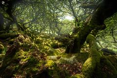 In Wistman's Wood (dieLeuchtturms) Tags: devon dartmoor england 3x2 grosbritannien wald europa wistmanswood europe greatbritain forest princetown vereinigteskönigreich gb