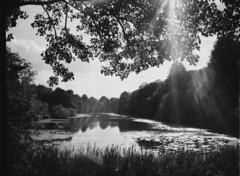Colwick. (Esmik D'Aguiar) Tags: colwick nottingham uk fujifilm ga645zi ilford mono film nature sun beams clouds reeds lens flare