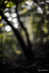 Twisted Sister(s) (SpencerTheCookePhotography) Tags: nature outdoors maryland patapscovalleystatepark canon depthoffield dof trees bokeh green