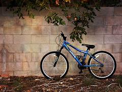 bike against the wall (johngpt) Tags: wall trees tree bicycle appleiphone7plus janelensdelauney1941filmjollyrainbo2xflashpostprocessed procameraapp hipstamatic janelensdelauney1941filmjollyrainbo2xflashpostprocess riorancho newmexico unitedstates us wallwednesday hww