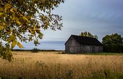 Barn & Field - Grange et champs (soniamarmen) Tags: barn field golden dark sky trees landscape