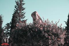 IMPREGNACIÓN DE ENERGÍA EN LOS CEMENTERIOS (Oniria Misterio) Tags: impregnaciónenergéticaencementerios artículo lugares miedo sombríos solitarios silencio atmósfera tristeza divulgación fotografía cementerios lápidas nichos estatuas crucifijos impregnaciónenergética fantasmas demonios espíritus horror terror muerte infestación evps paranormal impregnationenergyincemeteries article enigmas gentesombra orbes apariciones