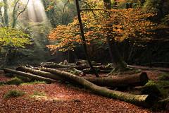 Autumn Glow (Andrew Hocking Photography) Tags: autmn light golithafalls golitha liskeard cornwall woods woodland forest trees colour yellow orange volumetric carpet leaves shafts gloom dark england landscape gb uk