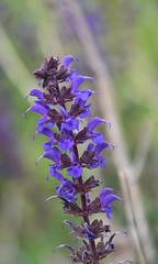 Autumn Flora 2018 (SoS) (myphotomailbox) Tags: rotterdam netherlands strevelsweg outdoor bloem macro flower seasonsflora smileonsaturday plant nature flora