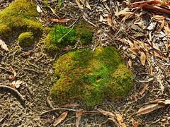 Mossy (elphweb) Tags: hdr highdynamicrange nsw australia