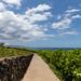 Wailea coastal trail Maui, Hawaii