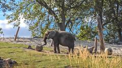 Landscape - 5922 (ΨᗩSᗰIᘉᗴ HᗴᘉS +21 000 000 thx) Tags: 7dwf landscape elephant animal pairidaiza nature nikon nikonp1000 coolpixp1000 p1000 hensyasmine namur belgium europa aaa namuroise look photo friends be wow yasminehens interest intersting eu fr greatphotographers lanamuroise