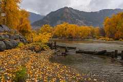 Wenatchee River II (NikonDigifan) Tags: leavenworthwashington wenatcheeriver autumncolors autumn foilage leaves trees river water nature mountains rain pnw pacificnorthwest washington nikon nikond750 nikon28300 mikegassphotography