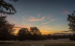 Parklife (frattonparker) Tags: btonner lightroom6 nikond810 tamron28300mm win10 frattonparker sunrise parkland trees sheep whispy sky clouds cirrus cumulus cirrocumulus cumulonimbus altocumulus stratus stratocumulus mist