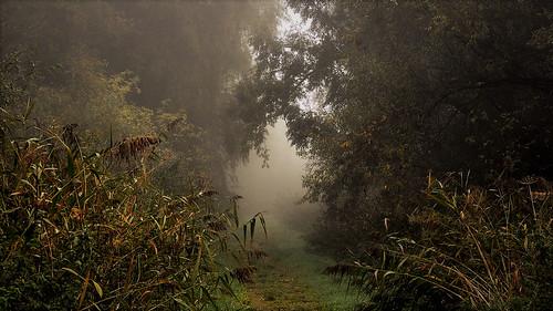 Oostvaardersveld in de mist,       Lelystad