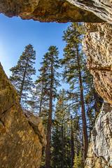 BareIslandLakeTrees4Sept1-18 (divindk) Tags: bareislandlake california maderacounty sierranationalforest backpacking camping granite hiking lake quiet reflection serene trees
