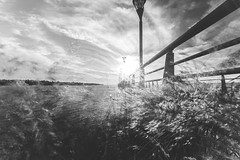 Painting plants. (Pablin79) Tags: light sun sunset afternoon lanterns sky clouds river water reflections longexposure plants mood shadows dark lines pier posadas misiones argentina