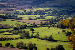 The First Signs of Autumn (DP the snapper) Tags: autumn ploughing cows stokesaywalk fields bales trees animals clunvalley
