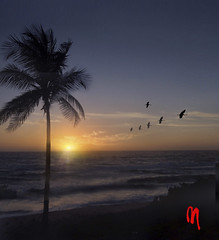 Phot.Venezuela.Margarita.Sunset.01.002.1992.jpg (frankartculinary) Tags: frankartculinaryyahoode nikon d800 d300 d200 f2 f3 f4 coolpix venezuela vette corvette classiccar guri reservoir orinoco southamerica caracas dam beach playa strand plage siaggia praia losroques litoral canaima angel falls salto angels margarita