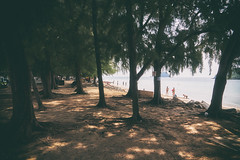 (a└3 X) Tags: natur nature alexfenzl olympus sonne licht strand beach thailand pattaya landscape outdoors tree color meer wildlife 3x a└3x wow availablelight