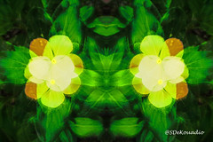 Vinca Flowers #hypnotique (Stephenie DeKouadio) Tags: abstractflower abstract abstractart abstractflowers hypnotique art artistic flowers flower flowersabstract flowerabstract beautiful beauty colorful darkandlight