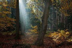 Spot an (Petra Runge) Tags: licht light wald herbst forest wood autumn strahlen beam germany sunray