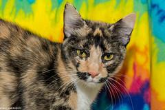 Cats (wacamerabuff) Tags: cat gato