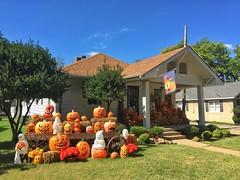 Fall of Halloween (Pejasar) Tags: iphone oklahoma norman autumn fall halloween pumpkin