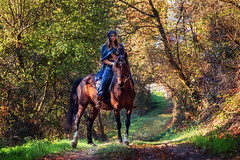 like a painting (pipe notjustaphoto) Tags: girl arabian style wallach holsteiner horse forest autumn fallcolours