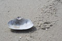 Shell (PurpleZedCreations) Tags: beach grasses seagulls sand flags ice shell shells water fountain waterfountain feather bird birds grass landscape waves sky blue