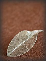 2018 Sydney: Fairy Leaf (dominotic) Tags: 2018 fairyleaf decomposingleaf macro sydney australia
