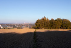 Seed Wheat 2018 (Winiarsky) Tags: seed wheat o autumn poland canon 70d 24105 is stm mf 255 massey ferguson trees shadows
