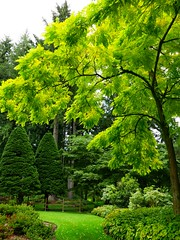 so green (ekelly80) Tags: washington august2018 summer bloedelreserve bainbridgeisland green gardens walk trail forest path grass light sun glow trees