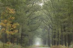 DN9A6203 (Josette Veltman) Tags: photowalk overijssel vechtdal nederland herfst bos forest autumn canon