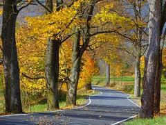 Last days of colours... (Arkadious) Tags: staremesto czech czechrepublic sudety sudeten mountains road tree trees drzewa jesień autumn fall nature leaves way przyroda natura path