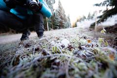 Frost photographing (JohannesLundberg) Tags: autumn forestroad pine photographing forest biology frost mattön crouching gysinge gävleborgcounty sweden se