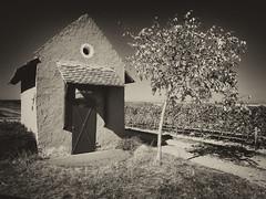 House of wine (Zoom58.9) Tags: house tree vineyard farmland bw sony landscape
