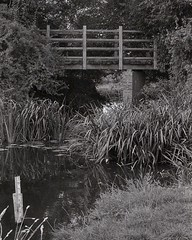 Thames: first bridge? (OhDark30) Tags: carl zeiss jena czj werra 3 2850 tessar 35mm film monochrome bw blackandwhite bwfp fomapan 200 rodinal river thames path bridge water stream reeds reflection