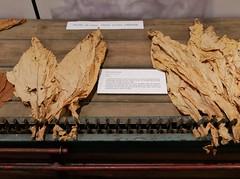 12.06.2018 - Bergerac, musée du tabac (23) (maryvalem) Tags: france bergerac musée tabac alem lemétayer alainlemétayer