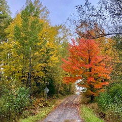 Bad weather, great fall colors (lukeernster) Tags: quiet relaxing midwest northwoods nature countryroad rustic sugarmaple fallcolors wisconsin
