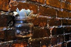 Plantita Brick Wall (allensinho) Tags: seattle washington pnw pikesplace longexposure portrait landscape boat city skyline gumwall neon streetphotography bike market flag