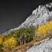 Waning Gibbous Moon Autumn Monarch Pass BWSC
