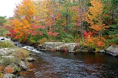 DSC03212 - Mill Stream (archer10 (Dennis) 153M Views) Tags: timberlea sony a6300 ilce6300 18200mm 1650mm mirrorless free freepicture archer10 dennis jarvis dennisgjarvis dennisjarvis iamcanadian novascotia canada