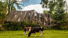 Houses of Klon 6 (L I C H T B I L D E R) Tags: poland polen polska house haus wolken sky clouds himmel masuria mazury mazuria masuren ermland ermlandmasuren rogozi klon gebäude wand landstrase gras holz kuh kühe cow cows abrisshaus ruine ruin rozogi