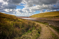 The path back to the start .... (Missy Jussy) Tags: readycondeanreservoir reservoir clouds sky bluesky hills path drystonewalls razzle rupert springerspaniel outdoor outside countryside rural rochdale denshaw landscape lancashire northwest saddleworth 24mm ef24mmf28 canon5dmarkll canon5d canoneos5dmarkii canon