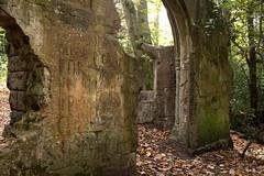 Runes | Autumn 2018 in south London | Sydenham Hill Wood-24 (Paul Dykes) Tags: london england unitedkingdom gb uk crystalpalace autumn fall autumncolours fallcolors
