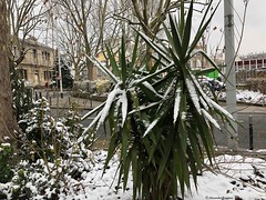 tropique-neige© (alexandrarougeron) Tags: photo alexandra rougeron neige urbain paysage nature paris