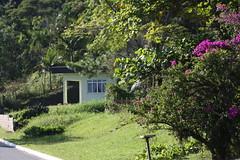 Zona Rural de Itajaí Fotos Marcos Porto (Thiago Morastoni - 15111) Tags: zona rural verde vale animais coruja bois vacas colheita arroz agricultor marcosporto