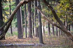 Arches (kirsten.eide) Tags: trees landscapes nikon autumn arch nature