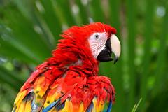 Pappacolors (luporosso) Tags: natura nature naturaleza naturalmente nikon nikond500 nikonitalia nikonclubit pappagallo parrot loro papagaio messico mexico colors colori closeup ritratto portrait