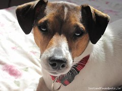 Sat, Sep 22nd, 2018 Lost Female Dog - Unnamed Road, Swinford, Mayo (Lost and Found Pets Ireland) Tags: lostdogunnamedroadmayo lost dog unnamed road mayo september 2018