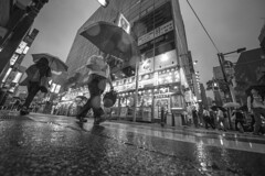 WET PAVEMENT (ajpscs) Tags: ©ajpscs ajpscs japan nippon 日本 japanese 東京 tokyo city people ニコン nikon d750 tokyostreetphotography streetphotography street seasonchange summer natsu なつ 夏 2018 shitamachi night nightshot tokyonight nightphotography citylights tokyoinsomnia nightview dayfadesandnightcomesalive alley strangers urbannight attheendoftheday urban othersideoftokyo walksoflife urbanalley tokyoscene anotherday monochromatic grayscale monokuro blackwhite blkwht bw blancoynegro blackandwhite monochrome streetoftokyo sidewalk wetnight rainynight rain ame 雨 雨の日 whenitrains 傘 anotherrain badweather whentheraincomes cityrain tokyorain noplaceforthesun umbrella whenitrainintokyo arainydayintokyo nosuntoday wetpavement