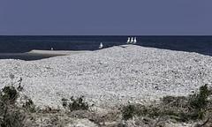White Shingle Island (blueheronco) Tags: herringgulls gulls birds whiteshingle island islet lake water georgianbay ontario canada